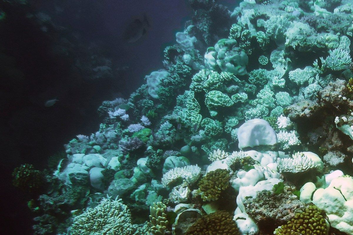 Bleached coral at Australia's Great Barrier Reef appear bone white compared to remaining healthy coral, which are golden brown and purple. <i>Photo by Mia Hoogenboom, for ARC Centre of Excellence for Coral Reef Studies via Climate.gov.</i>